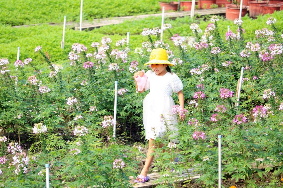 Say ngắm vườn hoa Đà Lạt nở rộ bên sông Sài Gòn - Ảnh 5.