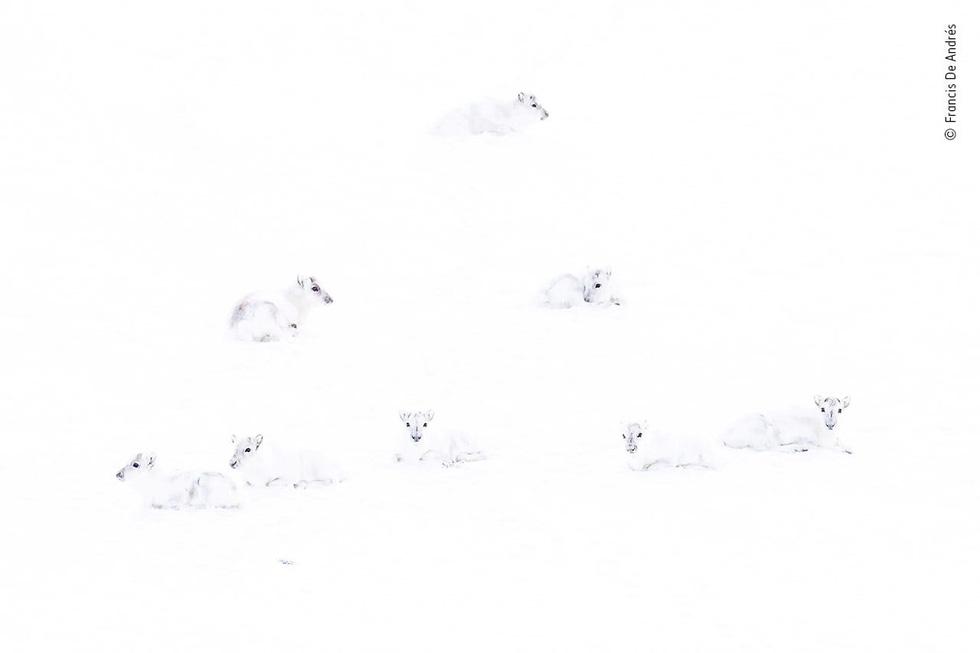 Thắng giải ảnh nhờ chộp khoảnh khắc 2 chú chuột đánh nhau - Ảnh 2.