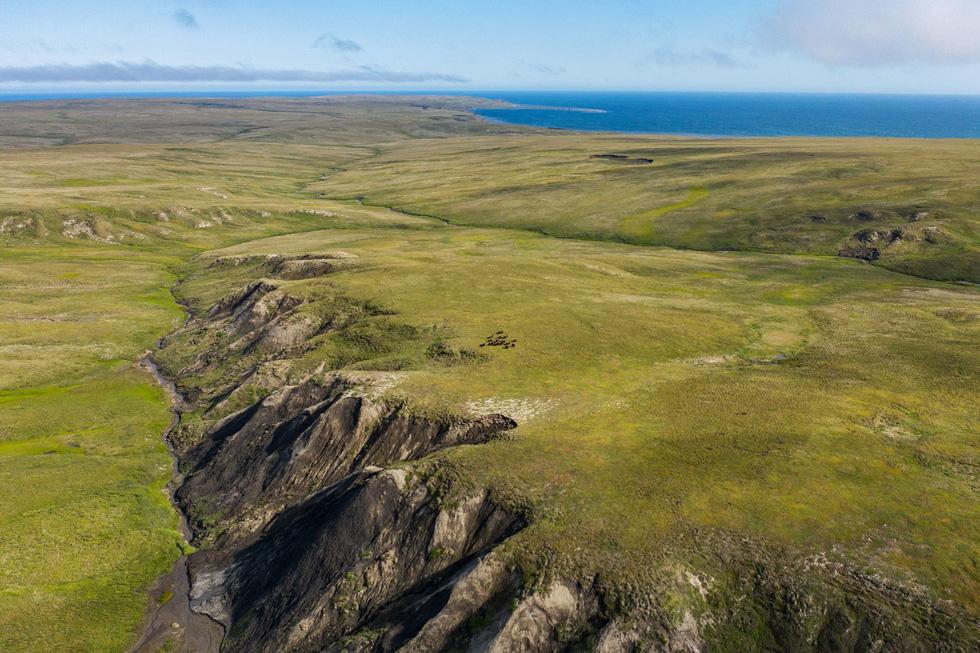 Giới khoa học lo ngại vì cỏ dại ngày càng nhiều ở Bắc Cực - Ảnh 4.