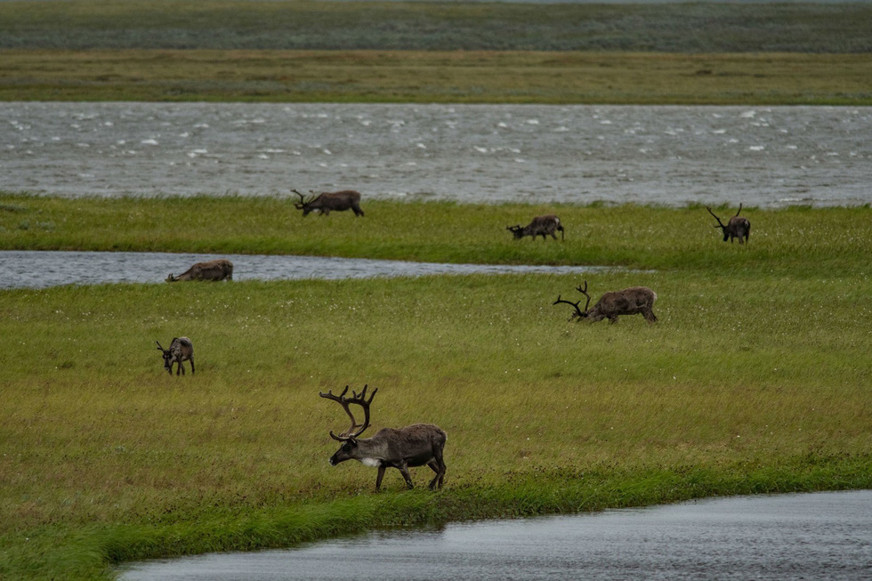 Giới khoa học lo ngại vì cỏ dại ngày càng nhiều ở Bắc Cực - Ảnh 3.