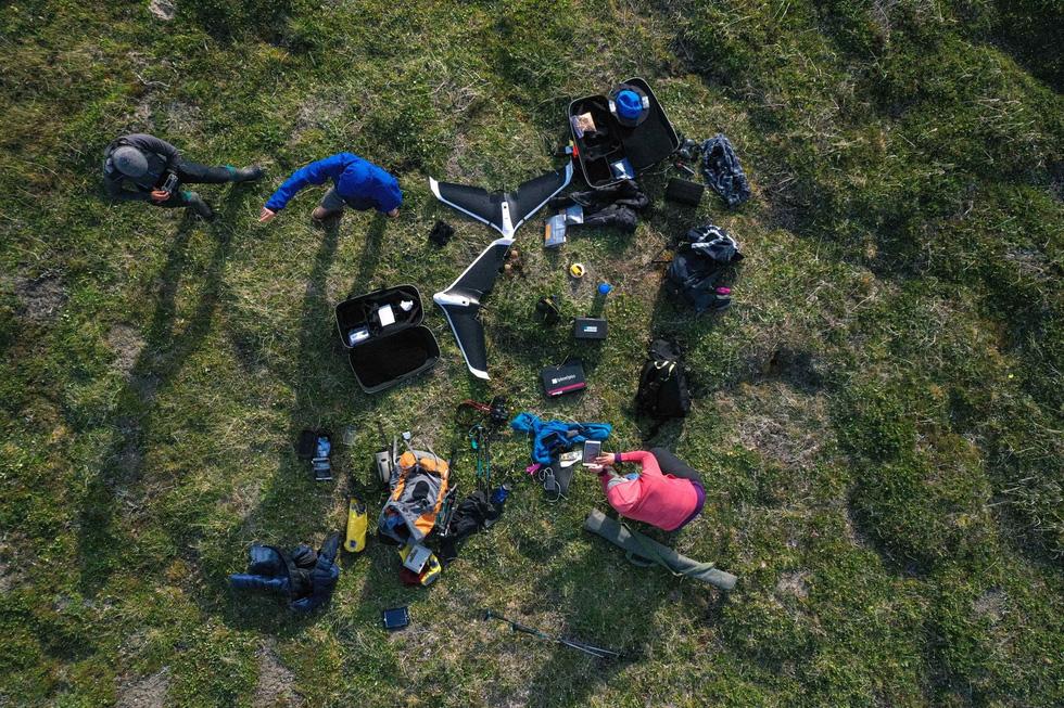 Giới khoa học lo ngại vì cỏ dại ngày càng nhiều ở Bắc Cực - Ảnh 2.