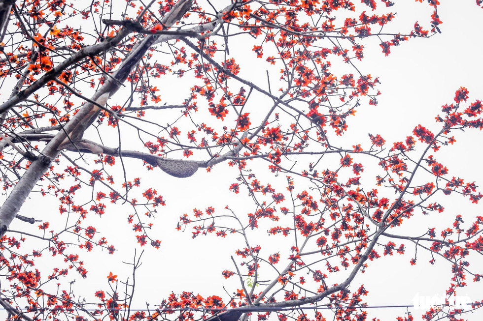 Kỳ lạ cây gạo đỏ rực có gần 30 tổ ong mật - Ảnh 5.