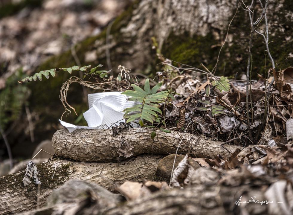 Nhiếp ảnh gia Mỹ 'gây sốt' vì bộ ảnh giấy vệ sinh 'sắp tuyệt chủng' - Ảnh 3.