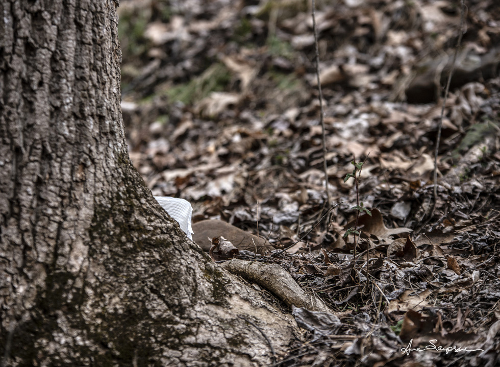 Nhiếp ảnh gia Mỹ 'gây sốt' vì bộ ảnh giấy vệ sinh 'sắp tuyệt chủng' - Ảnh 4.