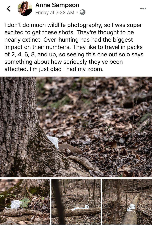 Nhiếp ảnh gia Mỹ 'gây sốt' vì bộ ảnh giấy vệ sinh 'sắp tuyệt chủng' - Ảnh 2.