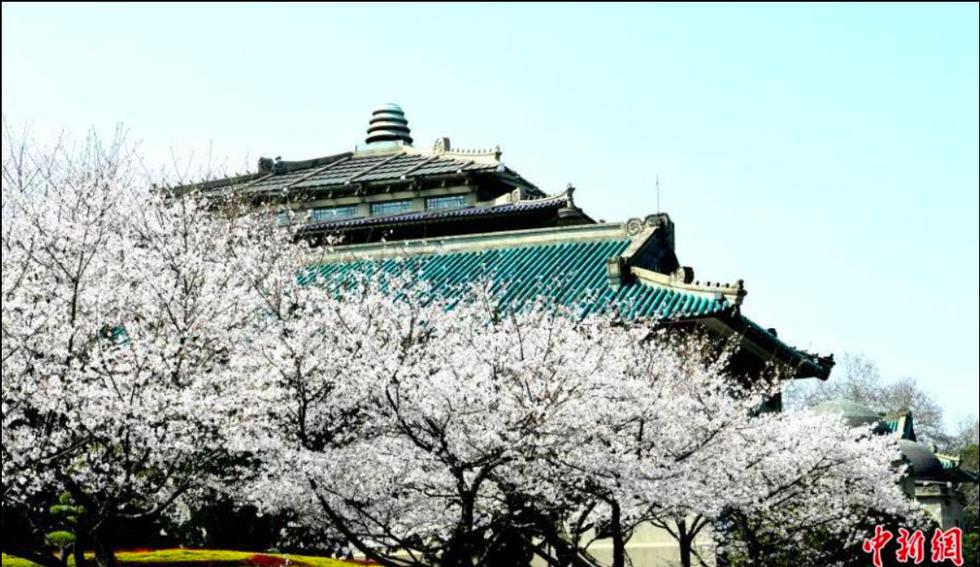 Bộ ảnh Vũ Hán và lời hẹn ước ngắm hoa anh đào - Ảnh 3.