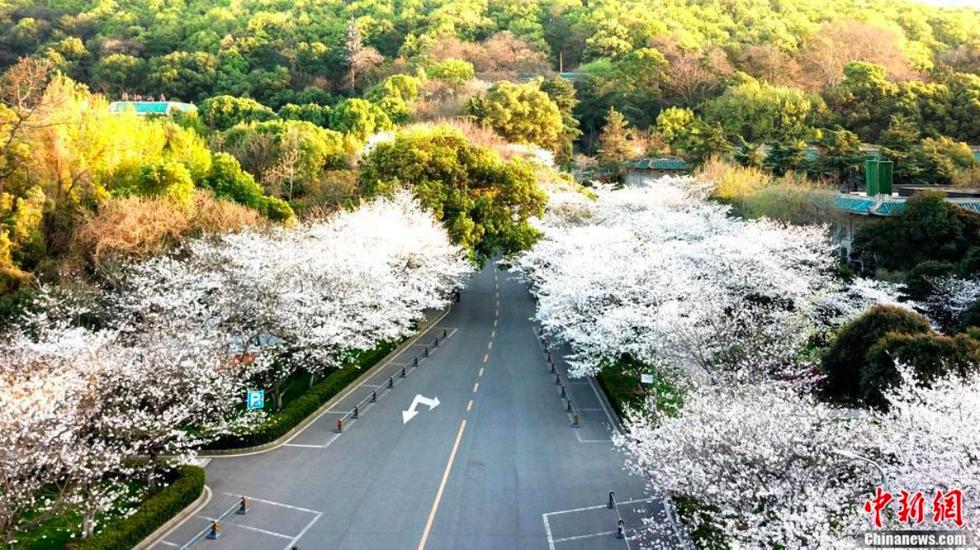Bộ ảnh Vũ Hán và lời hẹn ước ngắm hoa anh đào - Ảnh 4.