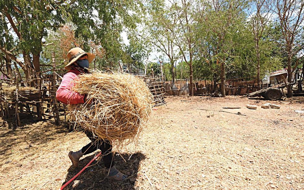 Du mục trên tiểu sa mạc Ninh Thuận - Ảnh 4.