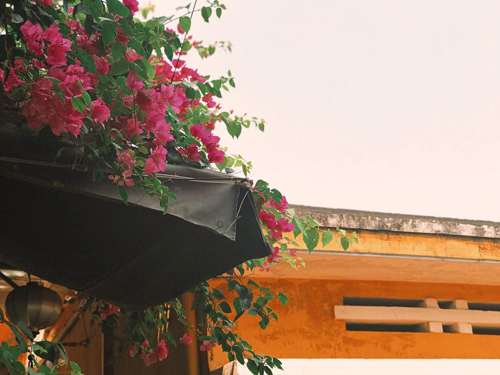 Hoa giấy nở rực rỡ Hội An trong những ngày corona - Ảnh 8.