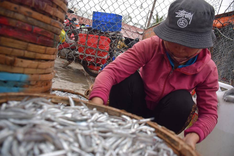 Tàu cập bến, ngư dân Quảng Nam phấn khởi bởi trúng mùa cá cơm - Ảnh 8.