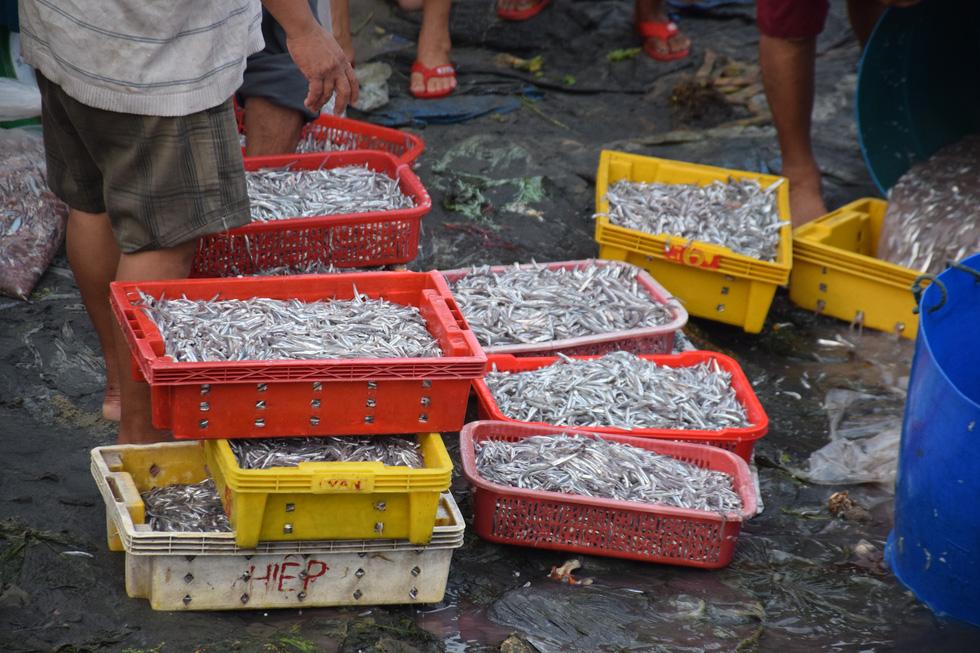 Tàu cập bến, ngư dân Quảng Nam phấn khởi bởi trúng mùa cá cơm - Ảnh 6.