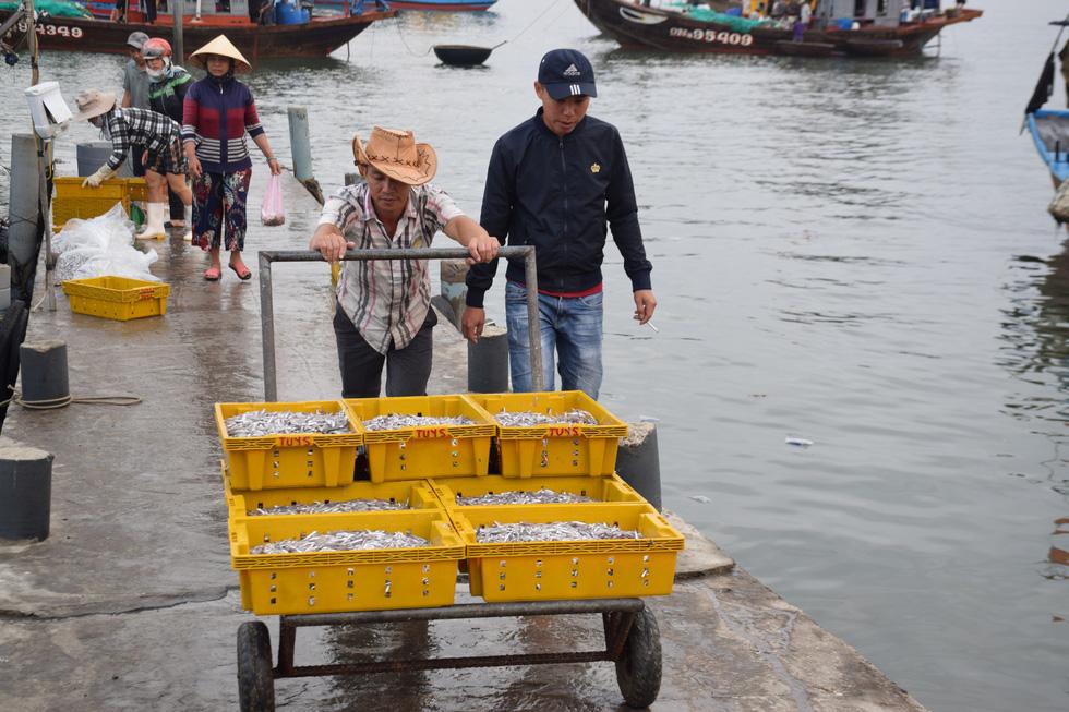 Tàu cập bến, ngư dân Quảng Nam phấn khởi bởi trúng mùa cá cơm - Ảnh 7.