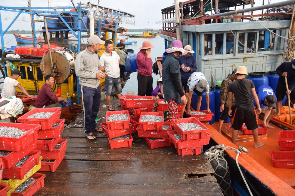 Tàu cập bến, ngư dân Quảng Nam phấn khởi bởi trúng mùa cá cơm - Ảnh 3.