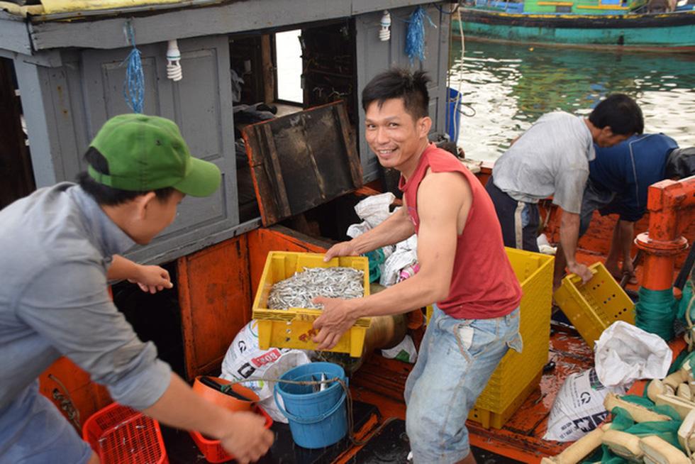 Tàu cập bến, ngư dân Quảng Nam phấn khởi bởi trúng mùa cá cơm - Ảnh 5.