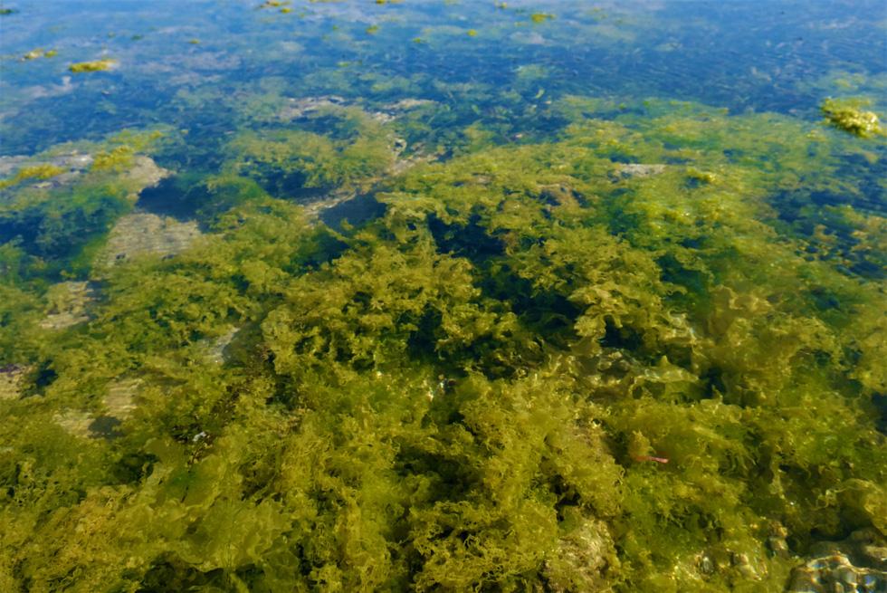 Chiêm ngưỡng bãi rêu xanh tuyệt đẹp ở Ninh Thuận - Ảnh 5.