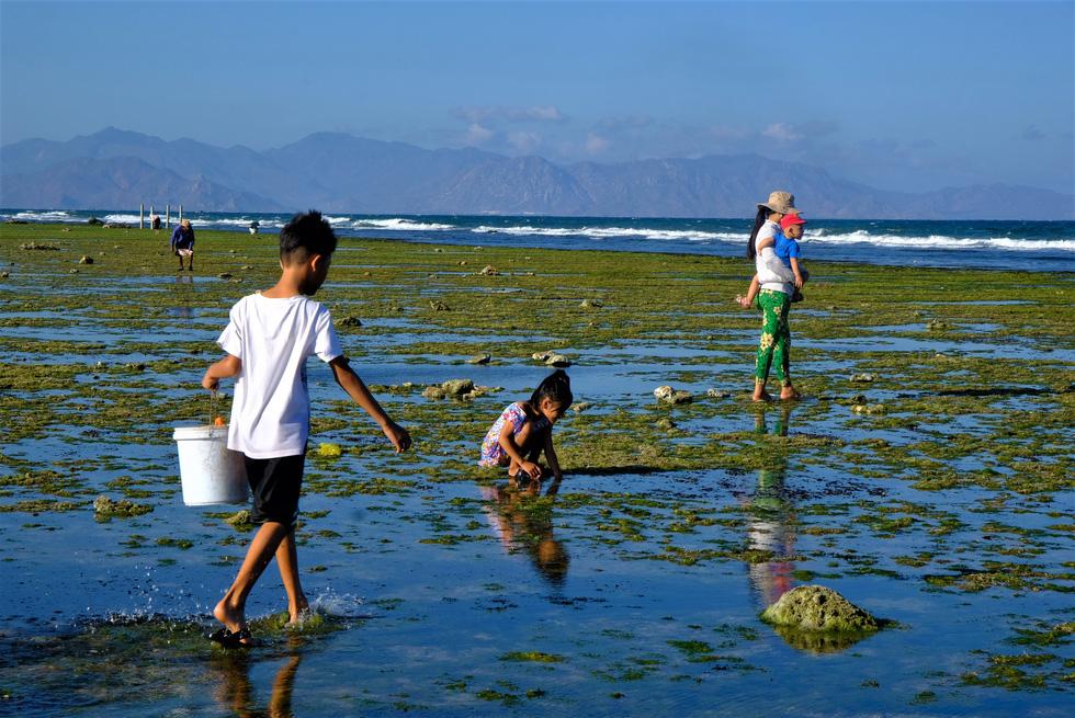 Chiêm ngưỡng bãi rêu xanh tuyệt đẹp ở Ninh Thuận - Ảnh 6.