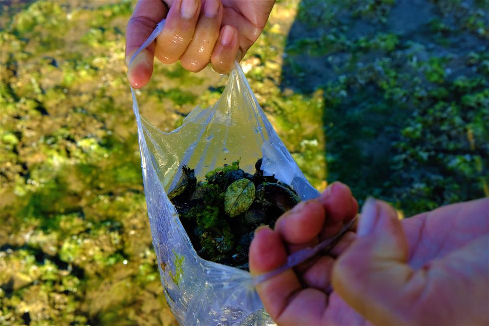 Chiêm ngưỡng bãi rêu xanh tuyệt đẹp ở Ninh Thuận - Ảnh 7.