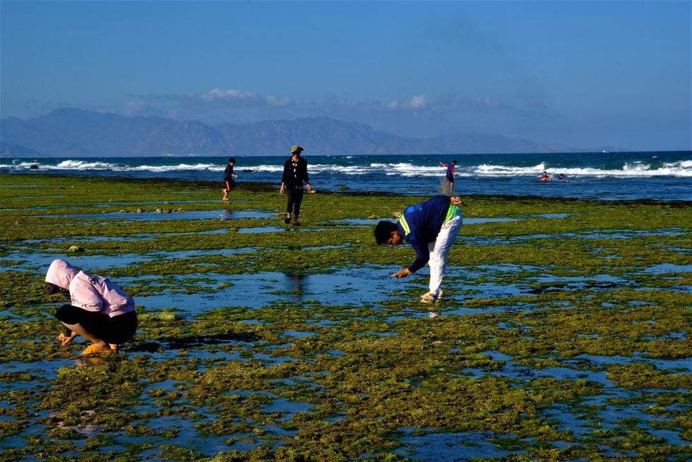 Chiêm ngưỡng bãi rêu xanh tuyệt đẹp ở Ninh Thuận - Ảnh 8.