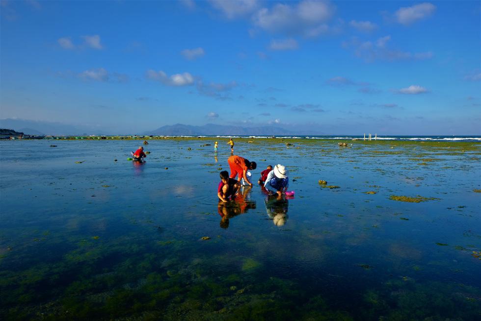 Chiêm ngưỡng bãi rêu xanh tuyệt đẹp ở Ninh Thuận - Ảnh 9.