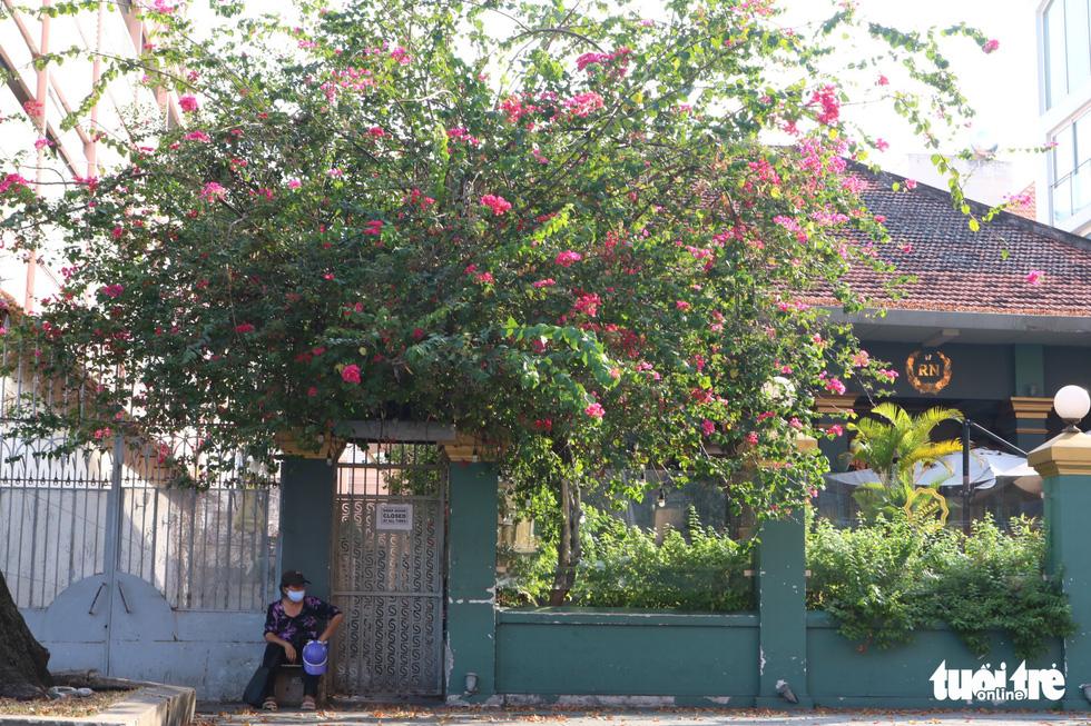 Có một mùa hoa chò lặng lẽ bay bay giữa Sài Gòn - Ảnh 12.