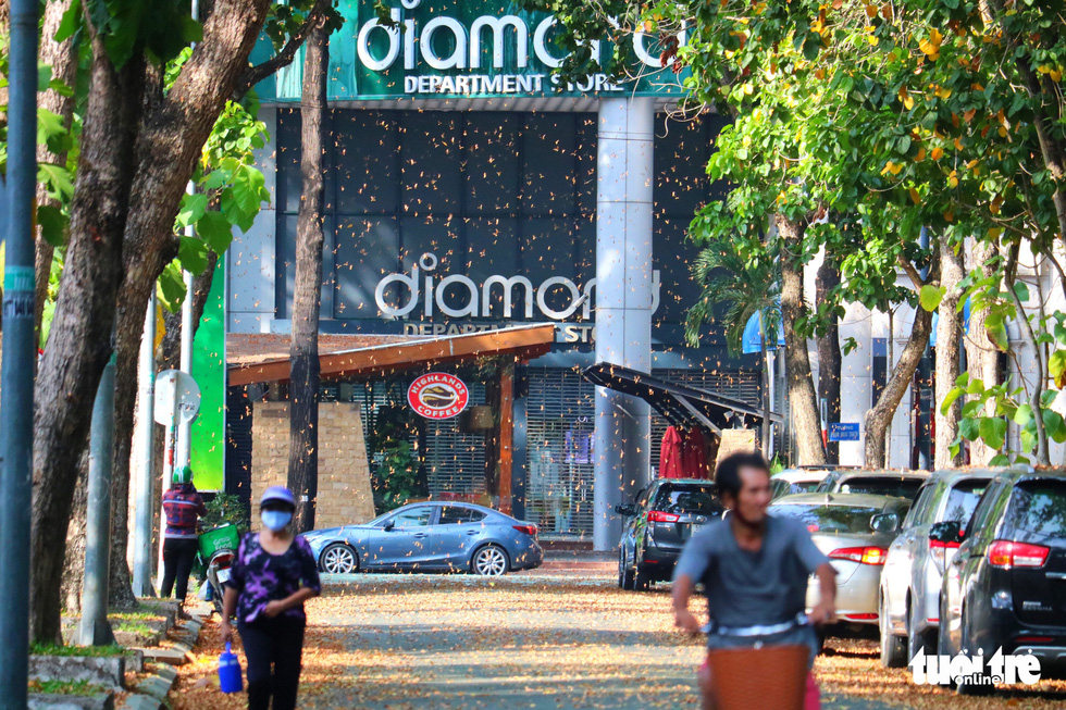 Có một mùa hoa chò lặng lẽ bay bay giữa Sài Gòn - Ảnh 15.
