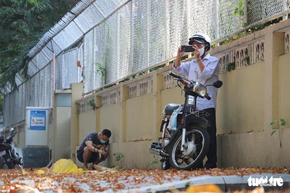 Có một mùa hoa chò lặng lẽ bay bay giữa Sài Gòn - Ảnh 3.