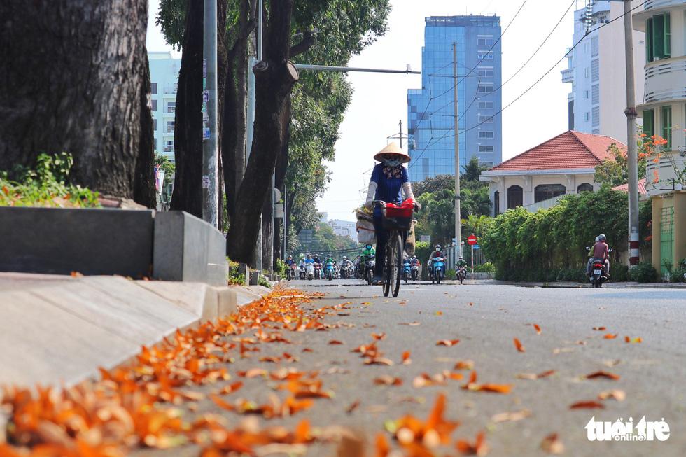 Có một mùa hoa chò lặng lẽ bay bay giữa Sài Gòn - Ảnh 5.