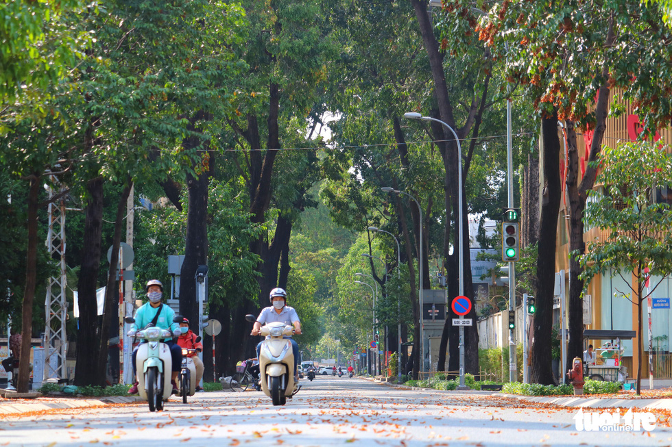 Có một mùa hoa chò lặng lẽ bay bay giữa Sài Gòn - Ảnh 6.