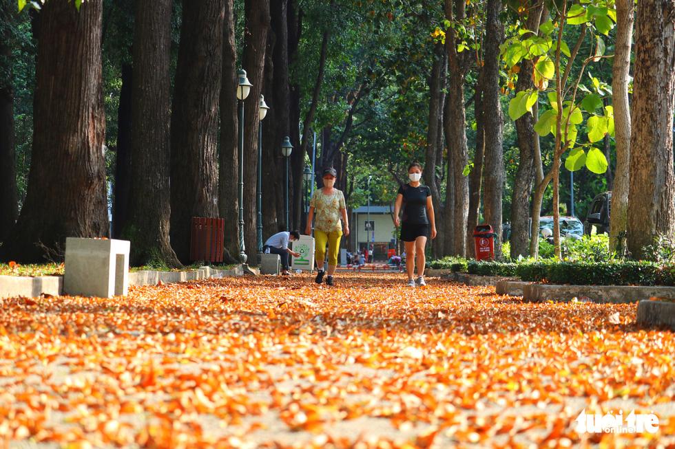 Có một mùa hoa chò lặng lẽ bay bay giữa Sài Gòn - Ảnh 9.