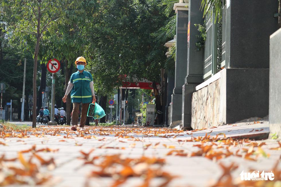 Có một mùa hoa chò lặng lẽ bay bay giữa Sài Gòn - Ảnh 11.