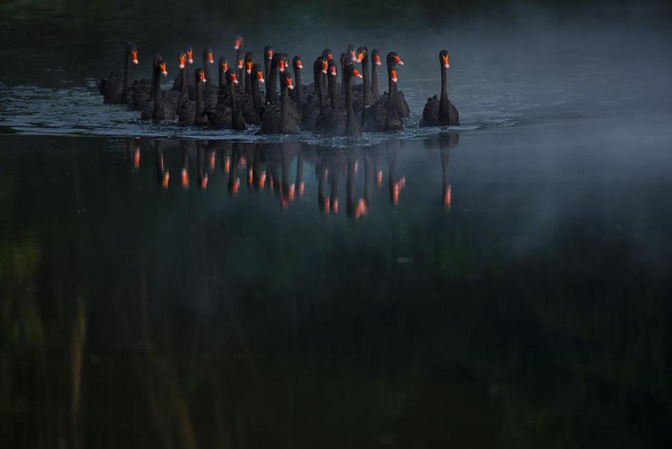 Xe bán cá cảnh rong ở Việt Nam chiến thắng giải ảnh tại Mỹ - Ảnh 10.