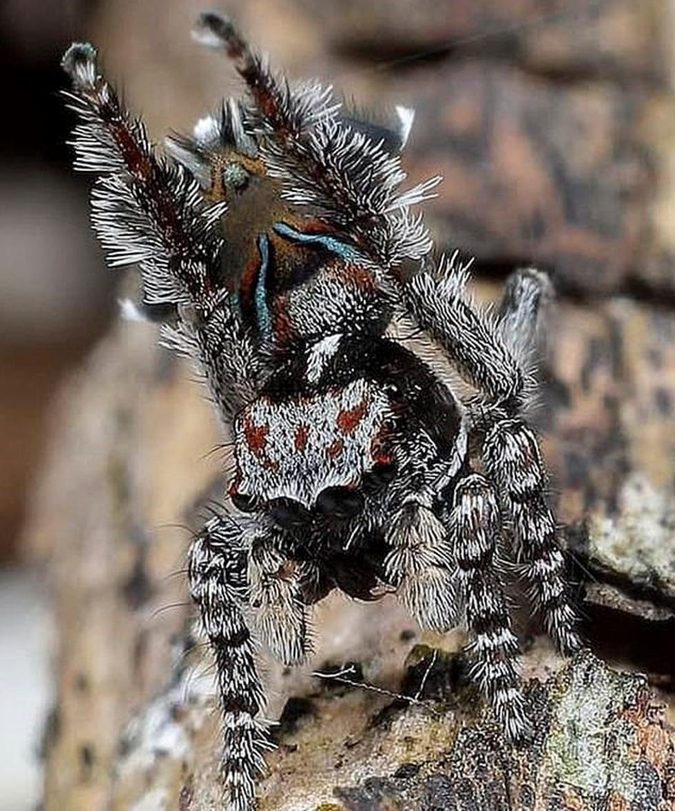 Phát hiện loài nhện hoa văn như tranh của Van Gogh - Ảnh 4.