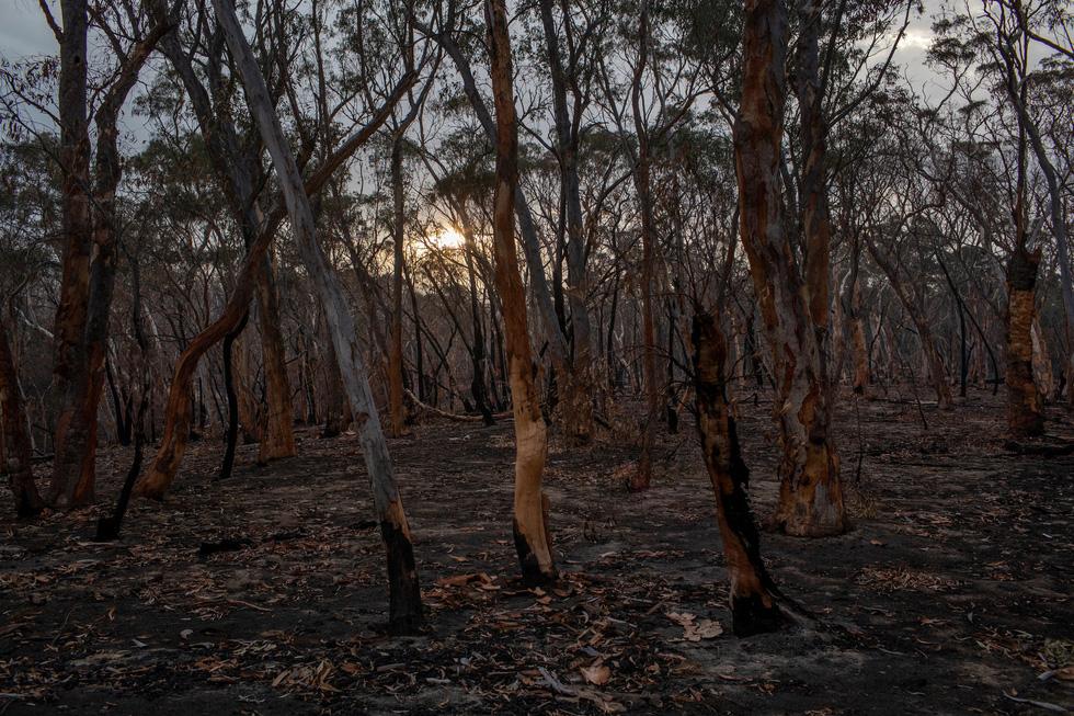 Ngày Trái đất, ngắm những điểm đen ô nhiễm trở nên trong lành giữa đại dịch - Ảnh 10.