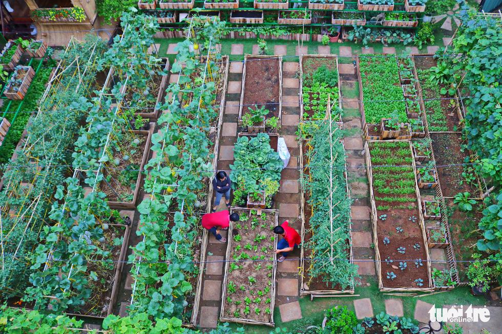 Đôi vợ chồng ở Sài Gòn biến khu đất 273m² thành vườn rau đầy cây trái sau thời gian cách ly - Ảnh 3.