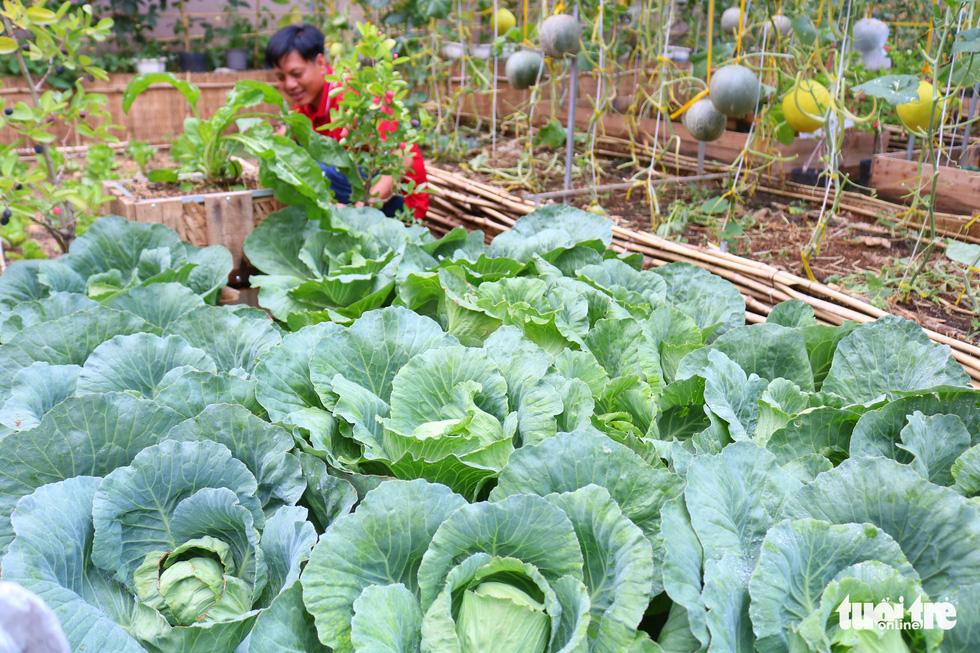 Đôi vợ chồng ở Sài Gòn biến khu đất 273m² thành vườn rau đầy cây trái sau thời gian cách ly - Ảnh 6.
