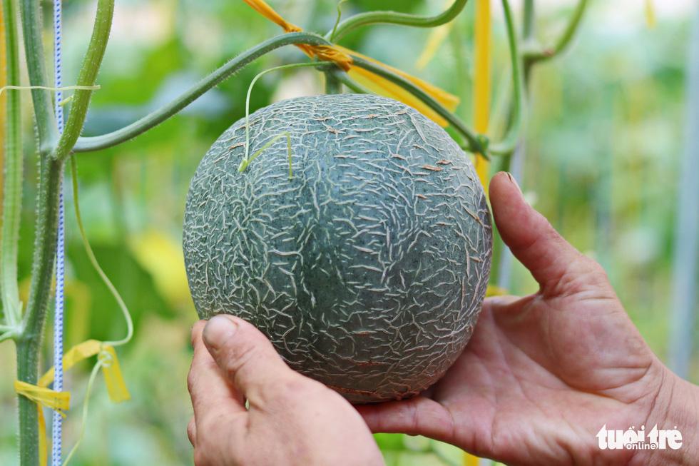 Đôi vợ chồng ở Sài Gòn biến khu đất 273m² thành vườn rau đầy cây trái sau thời gian cách ly - Ảnh 8.