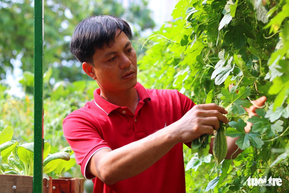 Đôi vợ chồng ở Sài Gòn biến khu đất 273m² thành vườn rau đầy cây trái sau thời gian cách ly - Ảnh 9.