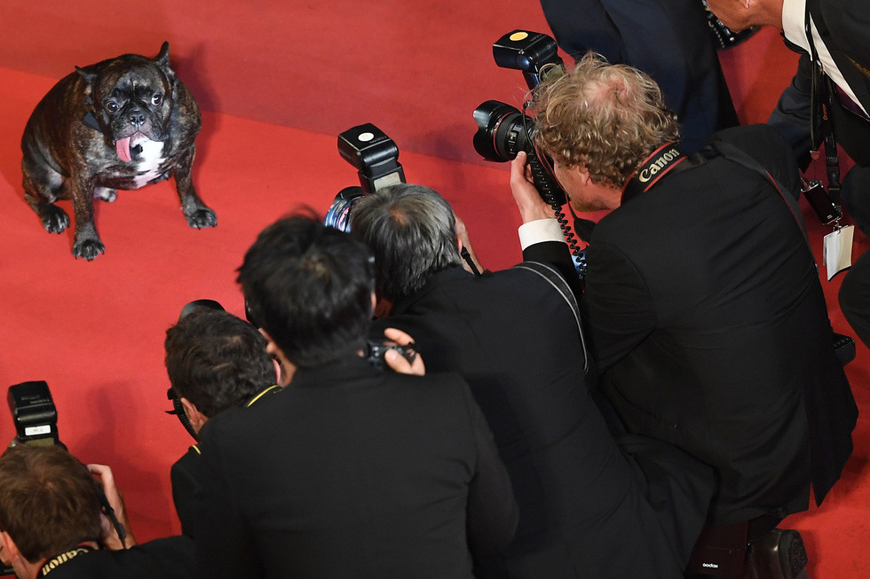 10 khoảnh khắc thú vị, ngọt ngào ở Liên hoan phim Cannes trong 10 năm qua - Ảnh 5.