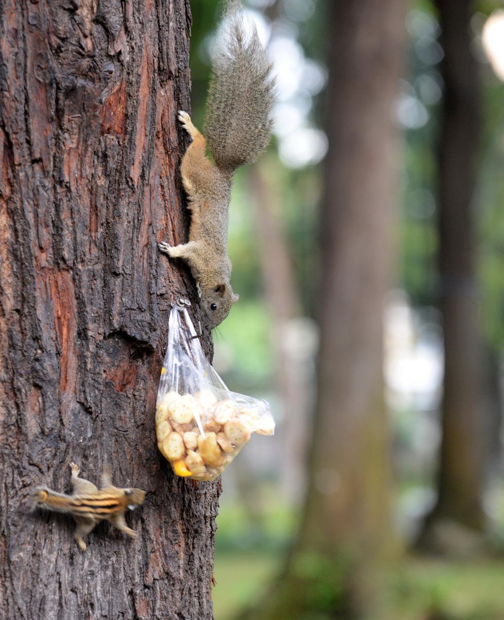Mang bữa ăn sáng cho thú hoang ở công viên - Ảnh 3.
