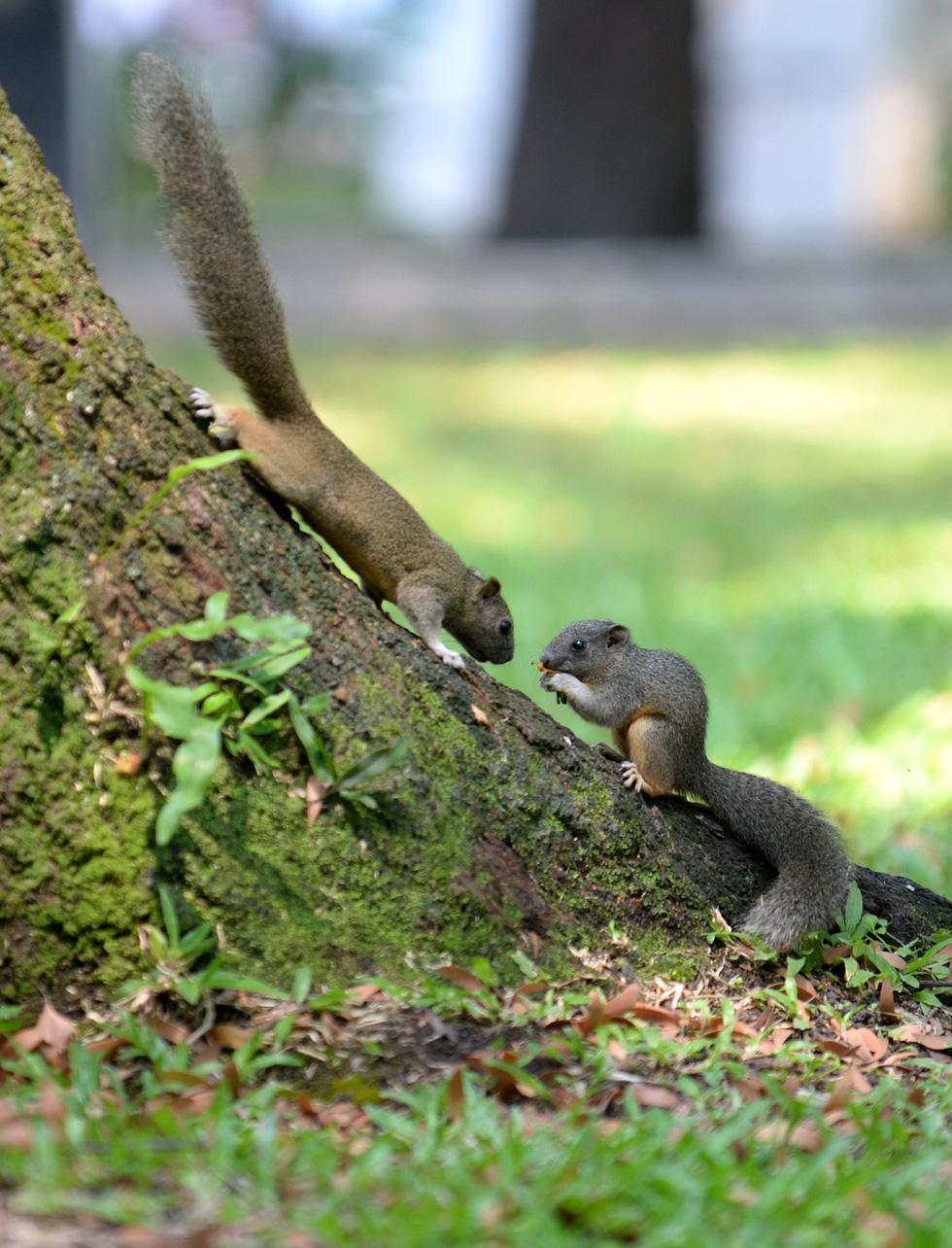 Mang bữa ăn sáng cho thú hoang ở công viên - Ảnh 7.