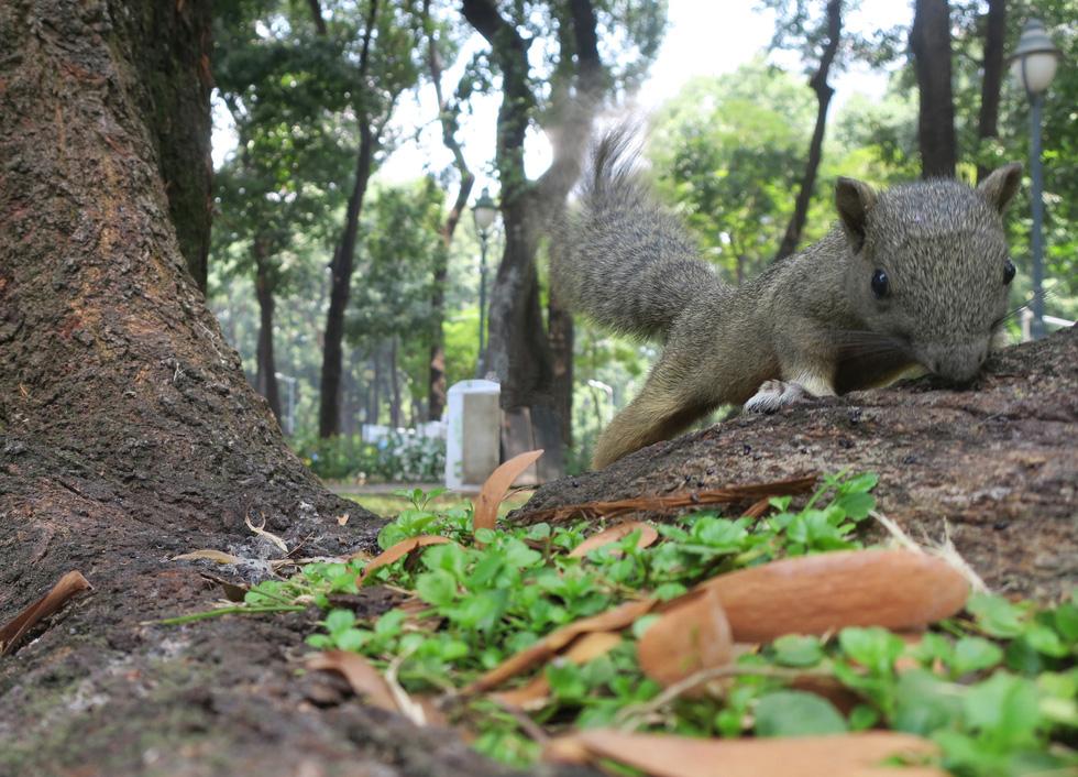 Mang bữa ăn sáng cho thú hoang ở công viên - Ảnh 9.