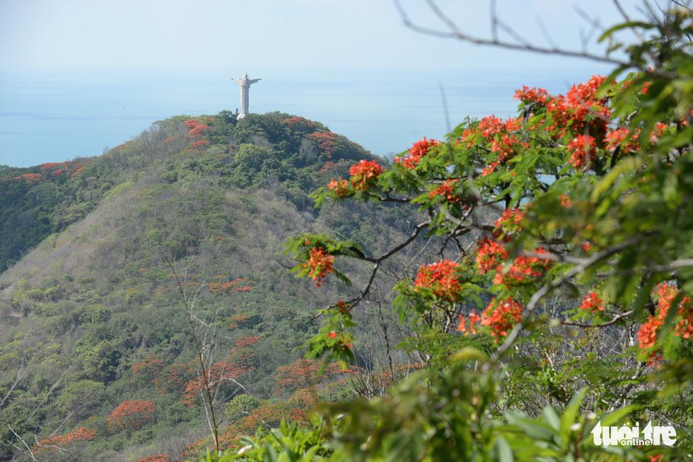 Rợp trời con đường hoa phượng đỏ ở Vũng Tàu - Ảnh 7.