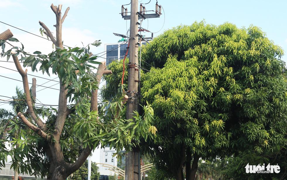 Hàng loạt cây xanh thành phố Vinh bị vặt trụi trong nắng nóng 40 độ - Ảnh 7.