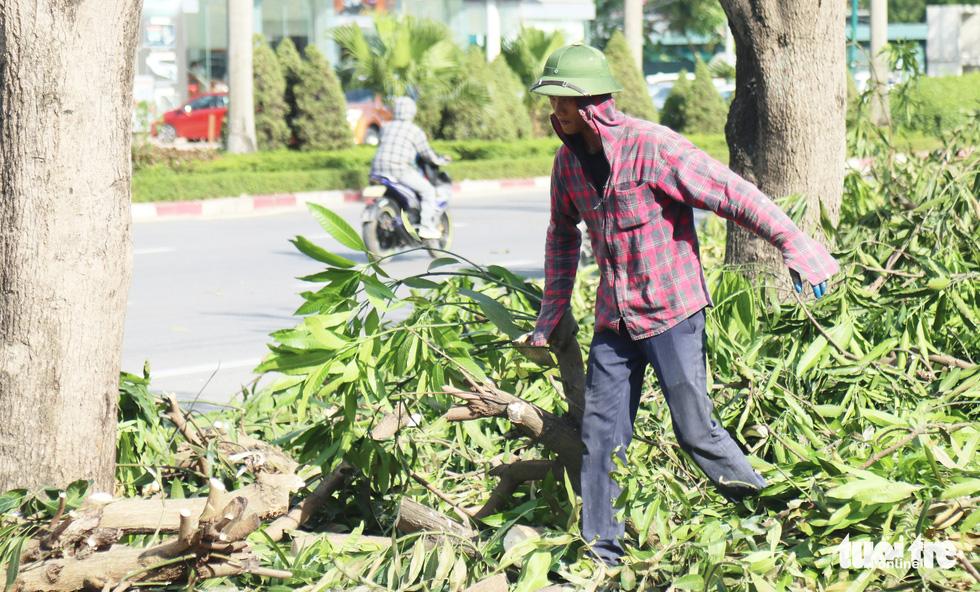 Hàng loạt cây xanh thành phố Vinh bị vặt trụi trong nắng nóng 40 độ - Ảnh 3.