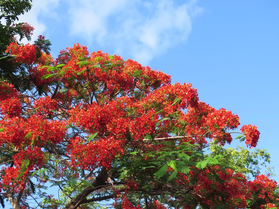 Thong dong Côn Đảo những ngày hè đẹp nhất trong năm - Ảnh 2.