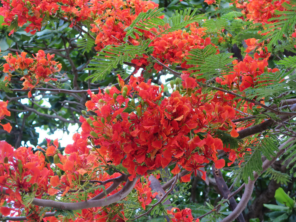 Thong dong Côn Đảo những ngày hè đẹp nhất trong năm - Ảnh 7.