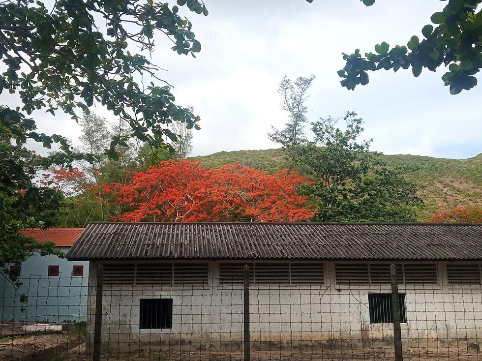 Thong dong Côn Đảo những ngày hè đẹp nhất trong năm - Ảnh 12.