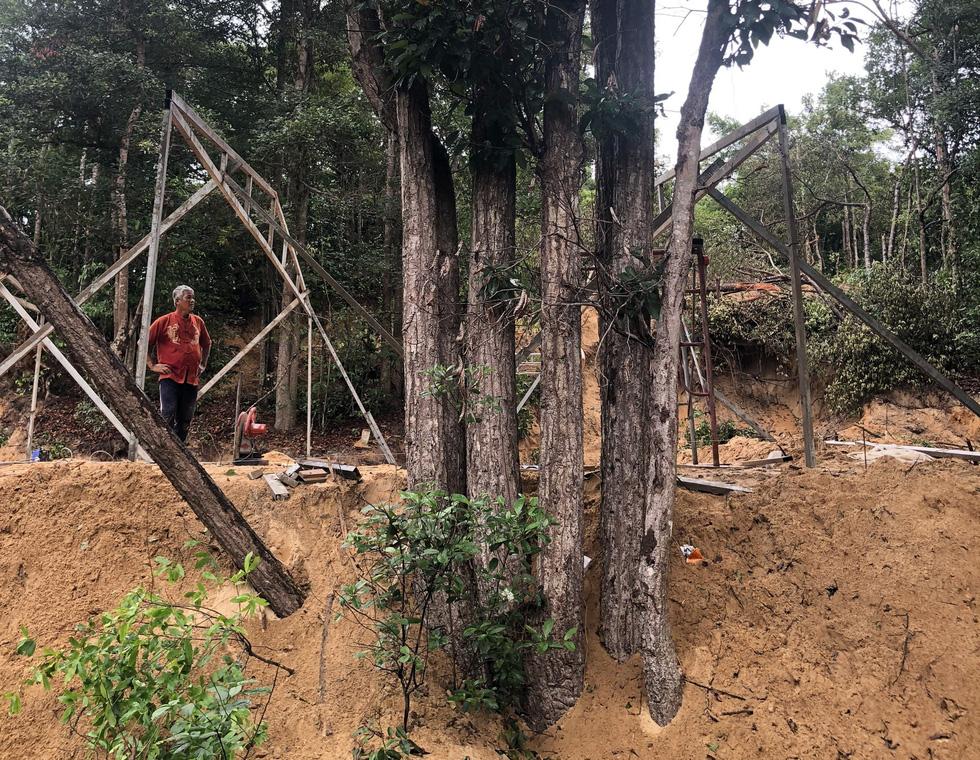 Chuẩn bị chặt hàng ngàn cây dầu tự nhiên ở Côn Đảo để làm khu tái định cư - Ảnh 3.