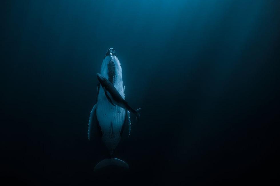 Sững sờ với nước qua giải Nhiếp ảnh quốc tế Hamdan năm 2020 - Ảnh 1.