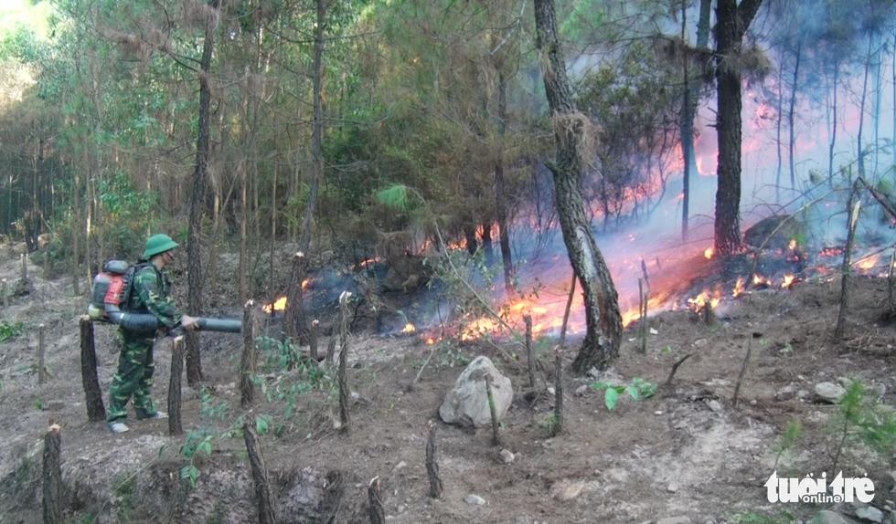 Lại cháy rừng dữ dội trong nắng nóng - Ảnh 3.